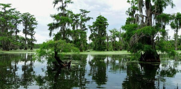 Experience an Airboat Swamp Tour