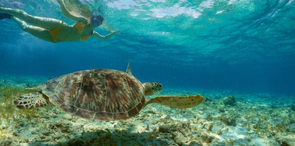Go snorkeling in the Keys