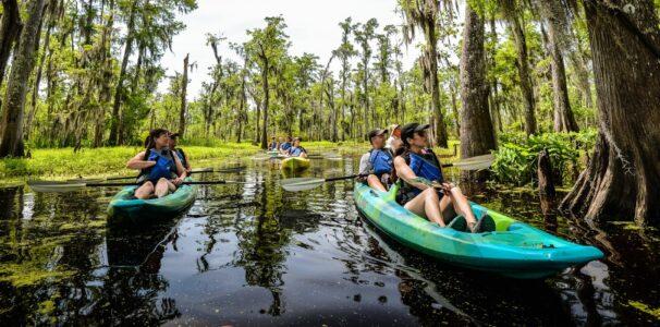 Kayak Swamp Tour
