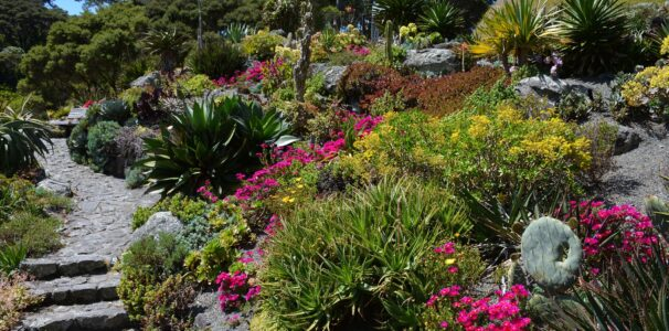 Visit the San Francisco Botanical Garden