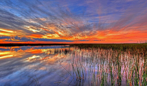 Explore the everglades on an airboat tour