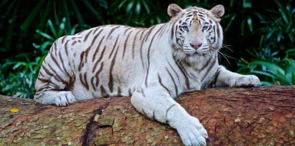 Visit the Audubon Zoo